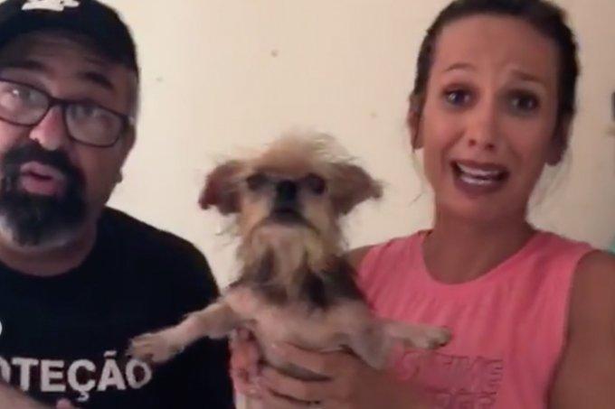 Luisa Mell participa do resgate de animais