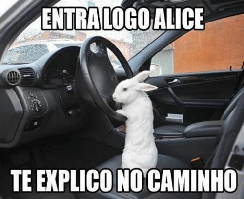 meme-coelho
