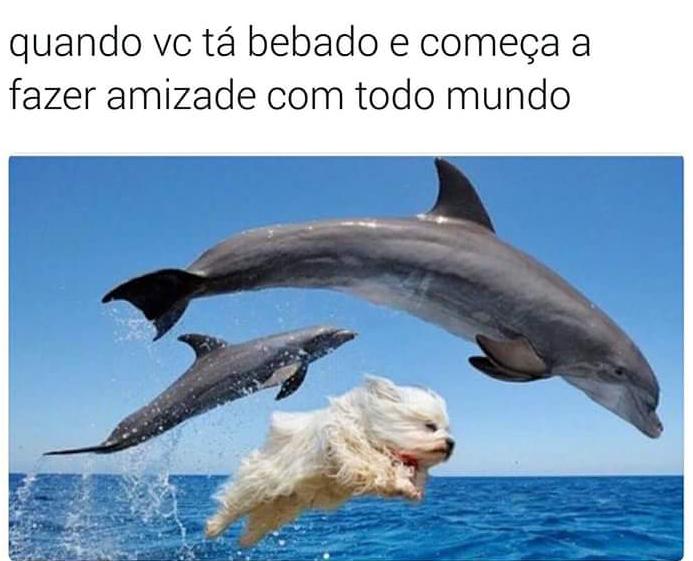 meme-golfinhos