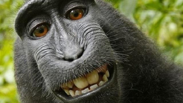meme-macaco