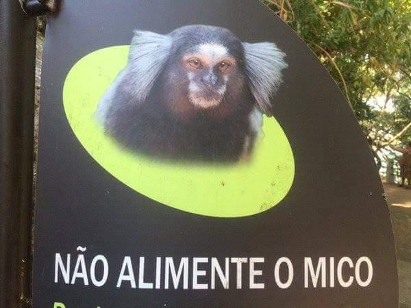 meme-mico