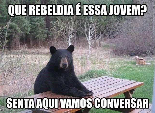 meme-urso