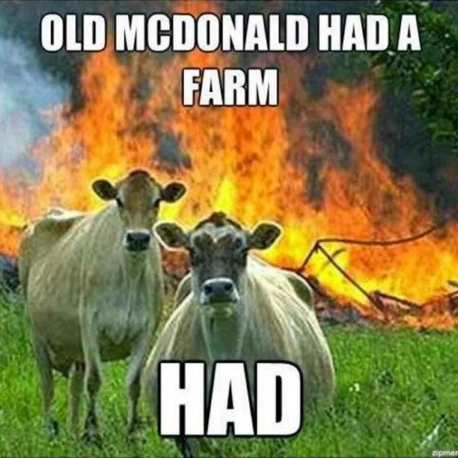 meme-vacas