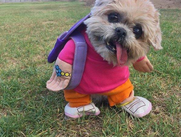 os-dez-cachorros-mais-estilosos-do-instagram_9-1