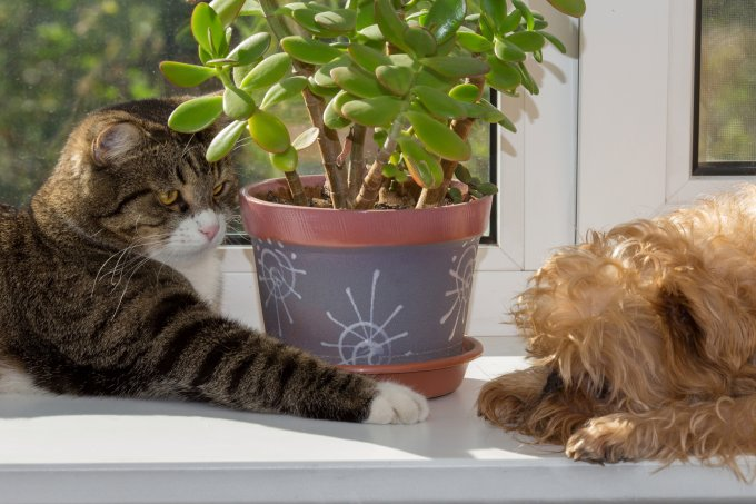 plantas tóxicas para pets