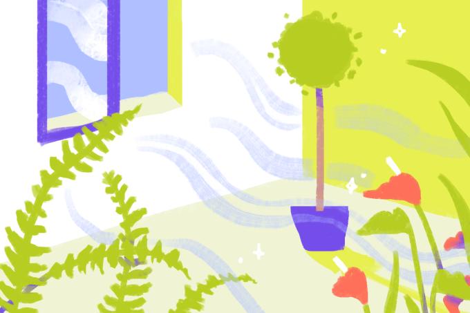 Plantas para purificar o ar de casa