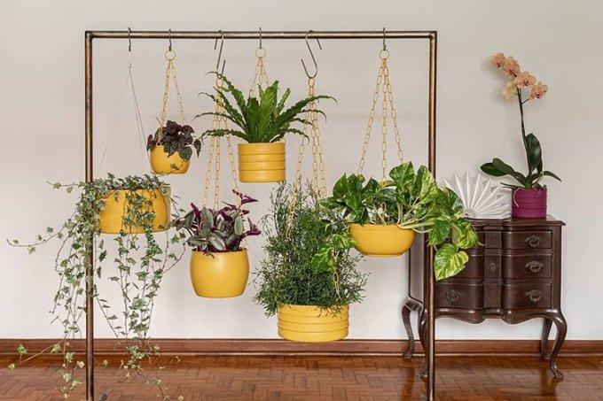 plantas penduradas na arara