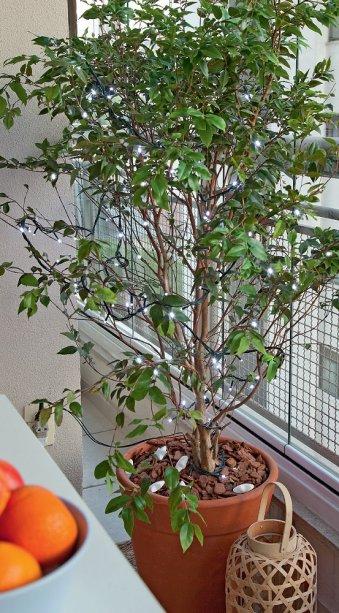 Até uma jabuticabeira se transforma em árvore de Natal enfeitada com um cordão de luz.