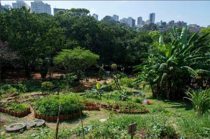 horta comunitaria