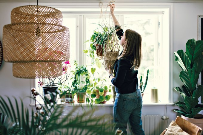 Mid adult female environmentalist hanging potted plant on window in room at home