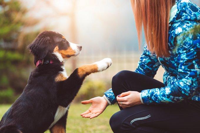 Competição cachorro mais inteligente tem um brasileiro
