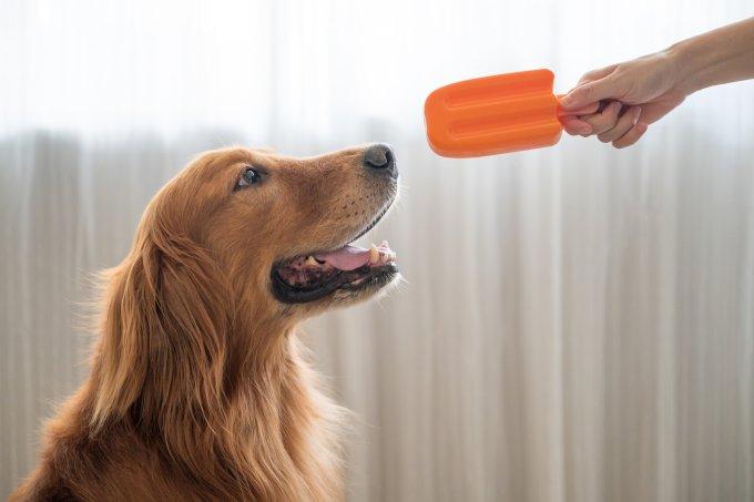 Receitas de sorvete para cachorro