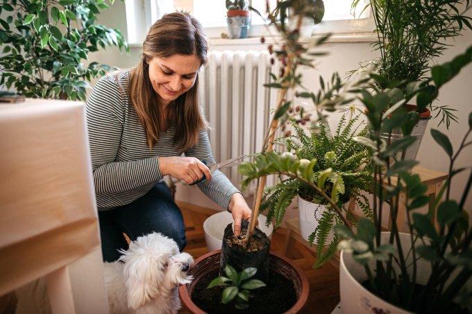 Plantas pet friendly