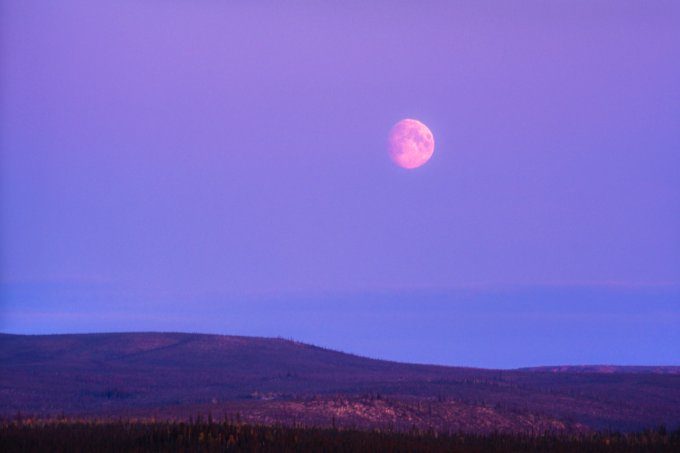 Big Moon over the Boreal Forest of the Yukon Territory at Dusk – Canada