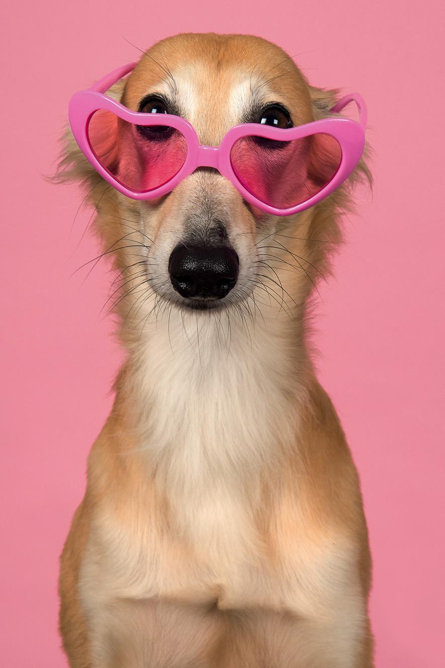 cachorro usando óculos