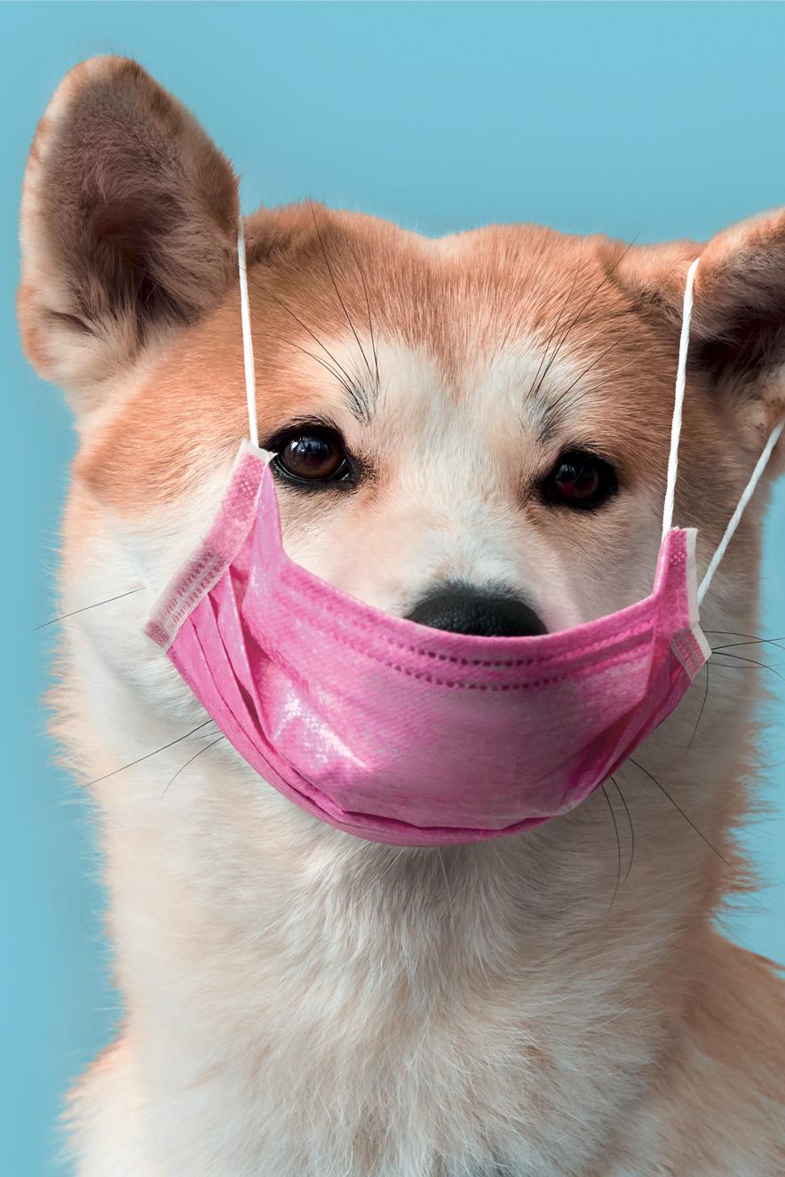 cachorro usando máscara