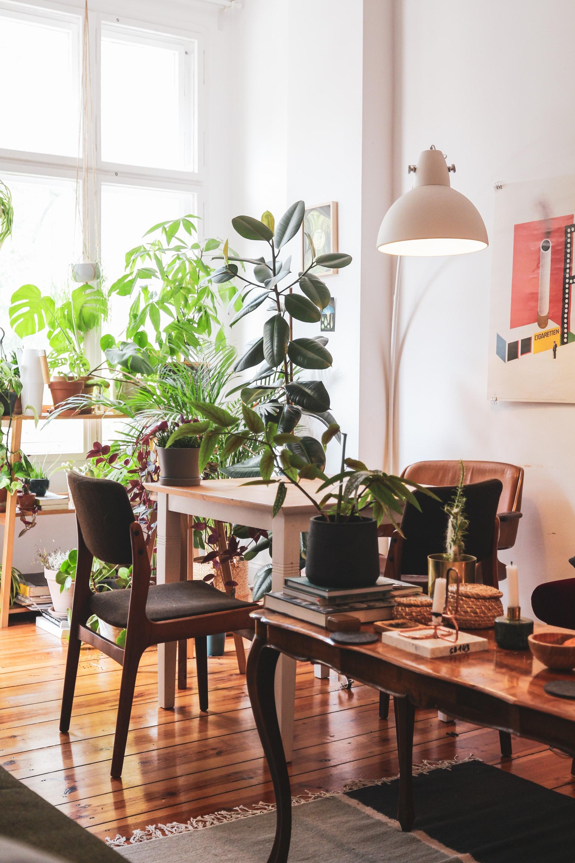 Urban jungle em casa