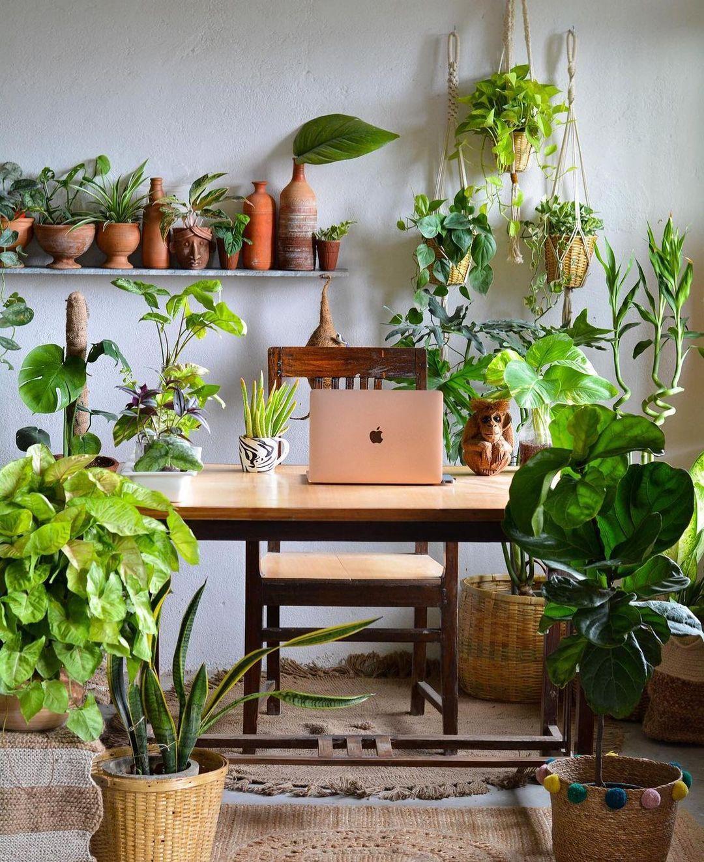Home office cheio de plantas