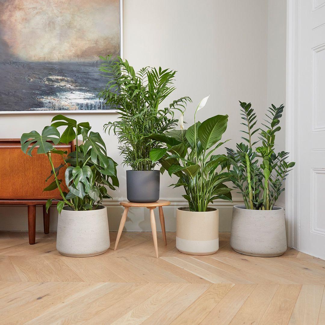 Vasos de plantas ambientados numa casa