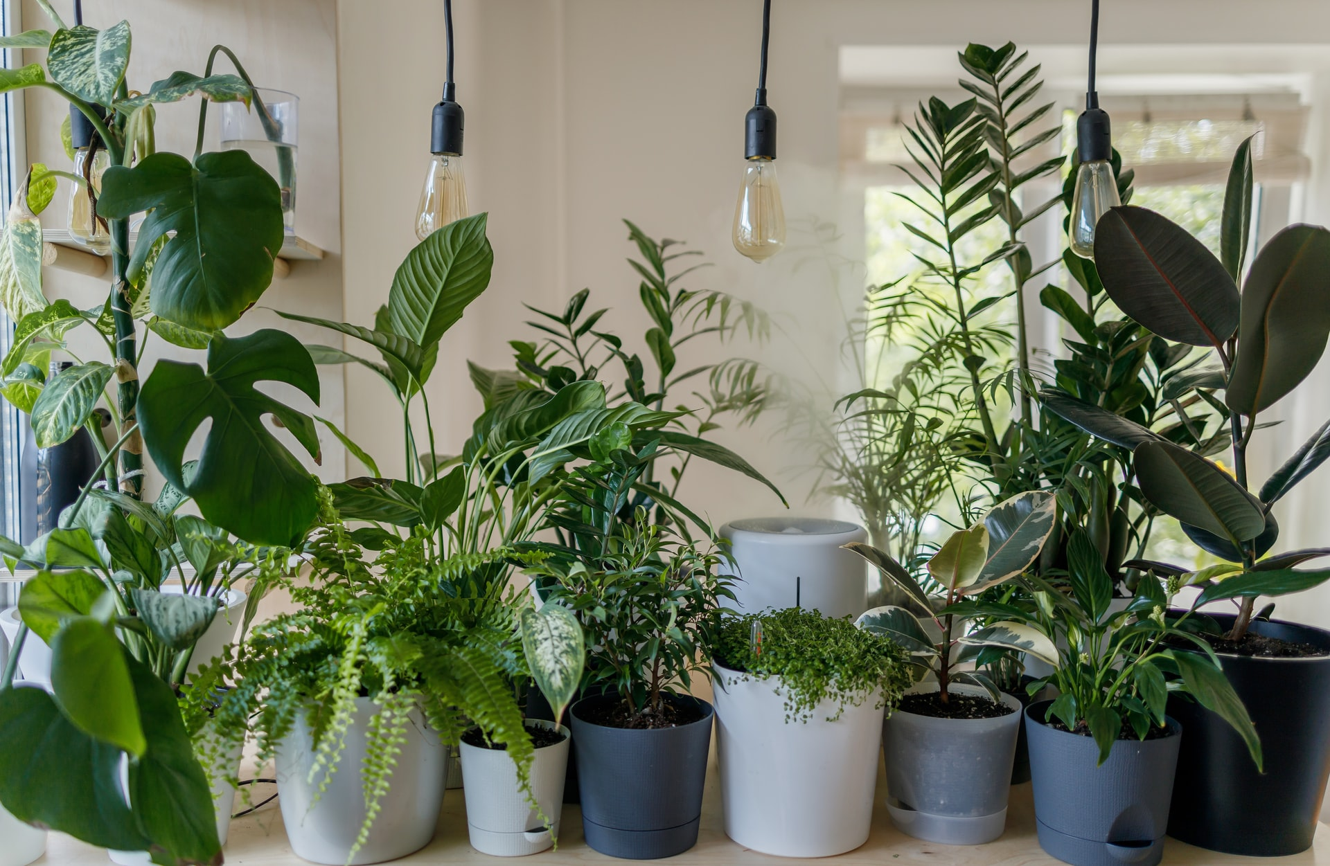 Plantas em vasos dentro de casa
