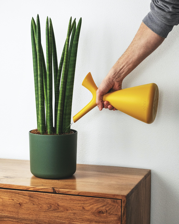 Rega de plantas em casa